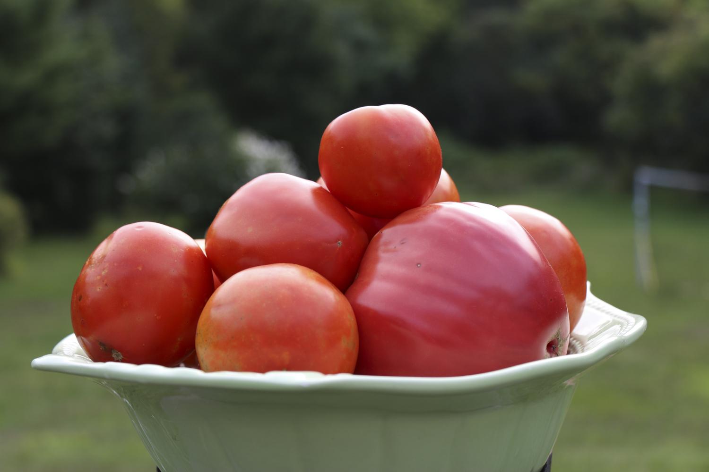 Late Summer Harvest Tasting
